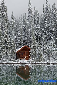 Rustic Cabin of Lake O'Hara Lodge in Snow Elegant rustic cabin of Lake O'Hara Lodge after a fresh autumn snowfall, along Lake O'Hara in Yoho National Park, British Columbia, Canada Cabin In The Woods, Lost In The Woods, Snowy Woods, Snowy Forest, Forest Cabin, Snowy Trees, Pine Forest, Magic Places, Lake Cottage