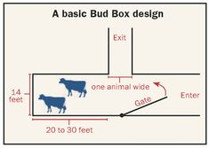 Cattle Working Facility Layout The Bud Box facilitates lowstress handling of cattle because it Cattle Barn, Beef Cattle, Cattle Farming, Livestock, Cattle Corrals, Raising Cattle, Round Pen, Dairy Cattle, Pen Design