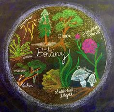 waldorf fifth grade botany chalk - Yahoo Image Search Results Blackboard Drawing, Chalkboard Drawings, Chalk Drawings, Chalkboard Art, Outdoor Education, Outdoor Learning, Chalkboard Pictures, Poetry For Kids, Alternative Education
