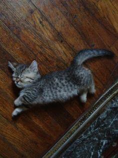 Tiny cat.