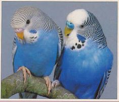 parakeets. I love them bc they will perch on your hand to eat treats.