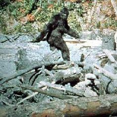Big Foot is probably the most well known cryptid, along with it's Himalayan cousin, the Yeti. The creature is described as a giant bipedal ape man who stands between 6.6 and 9.8 foot tall and weighs around 500 pounds.