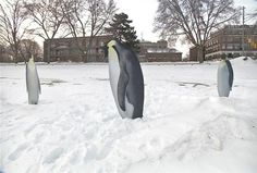 Penguins make their way to Northern Michigan. Yup, Maxbauer's Market put penguin statues up on West Grand Traverse Bay.