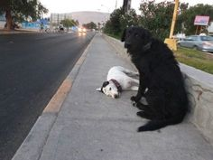 Scott tried to save his fallen companion after she was hit by a car. Demi was struck and instantly killed by a car while attempting to cross a road.  Witnesses at the scene said Scott bravely ran out onto the busy street and dragged Demi to the sidewalk. He then tried to wake her up by pawing her body. The spread of the story on social media helped in locating the dogs' owners, who had been searching for the dogs all day. Scott and Demi had been companions since they were puppies.