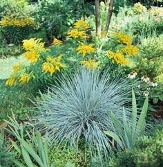 1000 images about tall border plants on pinterest tall for Tall border grass