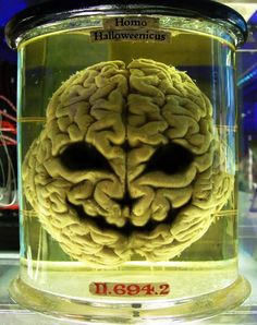 Brain in a Jar - Brain in the Vat - 10 Mind-Blowing Theories That Will Change Your Perception of the World Psyche Test, Mind Blowing Theories, Lois Mcmaster Bujold, Train Your Brain, Perception, Mind Blown, Consciousness, Human Body, Herbalism