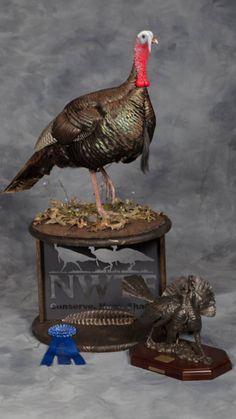 Eastern Turkey Gobbler by Jake Phillips Taxidermy Decor, Taxidermy Display, Bird Taxidermy, Turkey Art, Wild Turkey, Hunting Stuff, Hunting Dogs, Turkey Mounts, Deer Heads