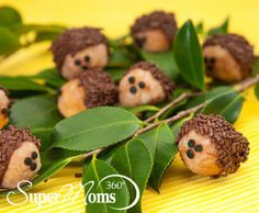 Donut Hole Hedgehogs - Simple & cute treat for a spring celebration. Tags: easy spring treat | cute spring treats | spring desserts | SuperMoms360.com