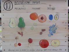 Rozdělení ovoce