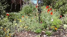Happiness in making a Garden Loveletter to Jesus November, Happiness, Garden, Plants, November Born, Garten, Bonheur, Lawn And Garden, Gardens
