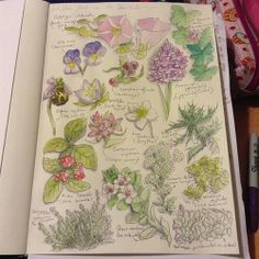 Casual botanical studies #art #journal. Nature, journal, sketchbook, notebook, dairy, words and images, drawing.
