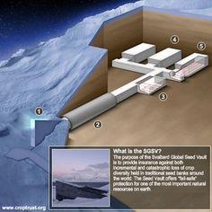SGSV : C'est le coffre-fort construit sous une île norvégienne où l'humanité commence à conserver toutes les semences agricoles du monde. La chambre forte se veut une sentinelle qui défie le temps. Elle a été construite à 130 mètres au-dessus du niveau de la mer, pour éviter une éventuelle montée des eaux, à l'écart de la zone sismique arctique, sous une montagne. Après la première porte blindée, un tunnel bétonné long de 120 mètres s'enfonce dans le grès.  Au bout, deux épaisses portes…