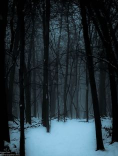 """maro-t: """"The woods are lovely, dark, and deep …"""" — Robert Frost by William Flowers on Flickr."""