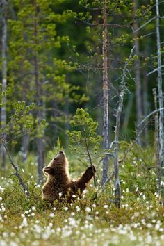 bellasecretgarden:Little Bear greets the first day of Spring