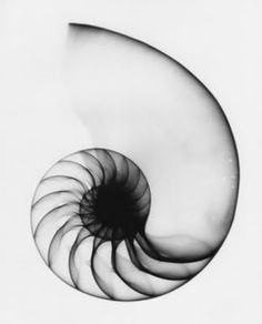 Matila Ghyka, The Geometry of Art and Life. This would be SO COOL as a tattoo. I'm leaning towards a nautilus because it symbolizes everything I want in a tattoo: my dedication towards biology and music, as well as my love of the ocean (water in general), and the stars. It's also perfect for the Darwin-lover in me.