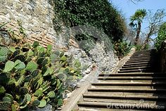 Photo taken in Arquà Petrarca, one of the most beautiful towns in Italy, where the poet which took its name and heritage Unesco from 2011 through the hills in the province of Padua in Italy. In the picture you see the entrance staircase of a village house. To the side of the steps and behind a stone wall you see a succulent plant called prickly pear, typical of the Mediterranean countries and a climbing plant.