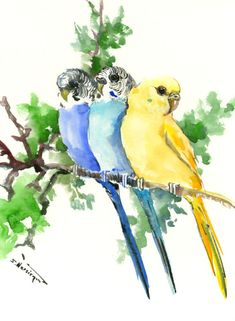 Budgies, Pet Artwork, bird painting blue yellow sky blue arwork wall art, original watercolor painting,