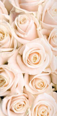 Ɲҽųʈɽaɭ Ᏸɭųʂɦ Ƥҽʈaɭ Red Wallpaper, Flower Wallpaper, Screen Wallpaper, Iphone Wallpaper, Blush Roses, White Roses, White Flowers, Pink Roses, Pretty Backgrounds