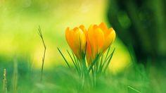 Yellow flower - Download Hd Yellow flower wallpaper for desktop ...