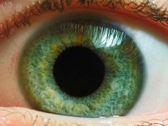 Here's Why Your Eyes Seem to Be Wired 'Backward' | Smart News | Smithsonian