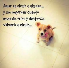 Images with messages with dogs and cats for WhatsApp - Images with messages with dogs and cats for WhatsApp - Animals And Pets, Baby Animals, Cute Animals, Funny Animals, Baby Dogs, Dogs And Puppies, Doggies, I Love Dogs, Puppy Love