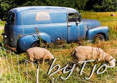 NFAC Blue Art Photography 1952 1953 Chevy Panel Van Sheep Watson Farm by Tjo