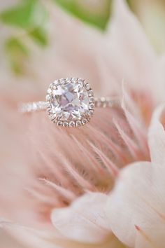 Would like this in white gold with brilliant cut diamond. Love that the sides aren't channel diamonds.  *Cushion-Cut Micropavé Diamond Engagement Ring, similar to Harry Winston.