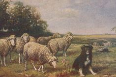 Border Collie With Sheep by Hill Early 1900 s LARGE BLANK NOTE CARDS