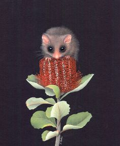 Pygmy Possum Painting by Lyn Cooke. Nature offers limitless inspiration and the bushland setting of her home provides much of her subject matter. Australian Native Flowers, Australian Animals, Australian Possum, Australian Bush, Australian Painting, Australian Artists, Australian Tattoo, Botanical Drawings, Botanical Art