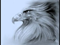 The Eagle is a symbol of Freedom and are majestic animals. They are really worth studying! In this video, we take a close look at the king of birds, one of the bigger birds of prey in the world. Bird Drawings, Easy Drawings, Animal Drawings, Pencil Drawings, Painting Videos, Painting & Drawing, Drawing Tips, Girl Drawing Easy, Drawing Videos For Kids