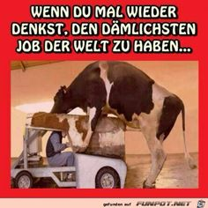 dibujos Schlimmer gehts immer It always gets worse Webfail - Fail Images and Fail Videos Funny Facts, Funny Signs, Funny Quotes, Funny Memes, Memes Humor, Cartoon Memes, Funny Cartoons, Avengers, Fail Video