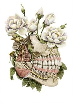 Dusty Dental Care Tips Brushes Dental Facts, Dental Humor, Dental Hygienist, Dental Implants, Dental Office Decor, Dental Office Design, Dental Life, Dental Health, Dental Wallpaper