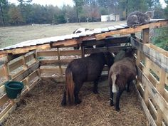 Shelter made out of pallets for the miniature horses and sheep.