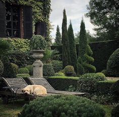IN THE GARDEN WITH MILO, Normandy. I adore this all green garden with its beautifully kept topiary. It belongs to one of my very favourite… European Garden, Italian Garden, Formal Gardens, Outdoor Gardens, Outdoor Sheds, Garden Design Pictures, Formal Garden Design, English Garden Design, The Secret Garden