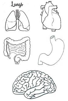 Manualidadesconmishijas: El sistema respiratorio y digestivo para infantil