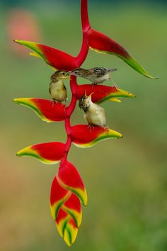 40 of the worlds weirdest flowers Unusual Flowers, Pretty Flowers, Tropical Flowers, Tropical Plants, Amazon Flowers, Beautiful Landscape Wallpaper, Flower Phone Wallpaper, Flower Bird, Bird Pictures