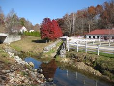 Creek behind the barn Horse Farms, Kentucky, Ranch, Golf Courses, Management, Barn, Horses, Mansions, House Styles