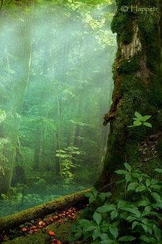 Mysterious forest by photographer Happetr. Landscape photography from Shutterstock.com. Ancient, mossy, fairytale, fantasy, hollowed, weird, shady forests, trees, roots. #Happetr #landscape #forest