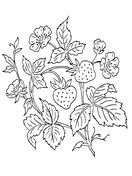 Strawberry Bush Coloring page