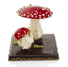 Chocolate Toad Stools