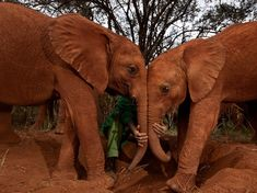 """Orphan Elephants, Kenya    Photograph by Michael Nichols, National Geographic    """"What a scared orphan elephant needs more than anything is other elephants. The process of becoming socialized begins as soon as the worst injuries heal."""""""