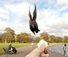 First-person POV photographs of birds eating from a person's hand -    As he sat in Kensington Gardens, London, photographer Alex Royal got it in his head to feed the birds with one hand and take pictures of himself doing this with the other. The resulting action shots are remarkable, and perhaps a little ominous…