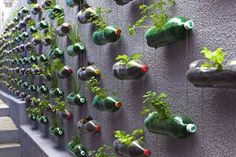 old-soda-bottles-recycled-planters.jpg (468×312)