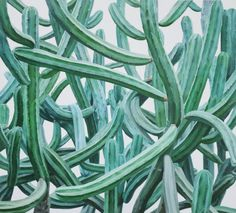 realistic cactus pai