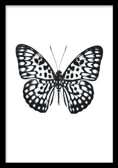 Find butterfly photo stock images in HD and millions of other royalty-free stock photos, illustrations and vectors in the Shutterstock collection. Thousands of new, high-quality pictures added every day. Butterfly Black And White, Spring Pictures, Black And White Posters, Butterfly Pictures, Photo Stock Images, Beautiful Butterflies, Free Photos, Illustration Art, Royalty Free Stock Photos