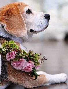 #Wedding #dog flower crown ToniK ❀Flowers in their coats❀