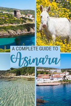 Asinara is one of the most unique places to visit in Sardinia. Read this post for everything you need to know about Asinara Sardinia, including Asinara donkey and Asinara National Park | Asinara island | Asinara Sardegna | #asinara #sardinia via @c_tavani