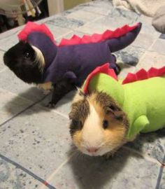 Genius! Someone with a ton of guinea pigs could built their own kinder, gentler Jurassic Park. - Mom.me
