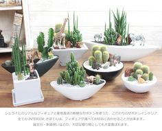 Succulent Bonsai, Succulent Gardening, Planting Succulents, Planting Flowers, Mini Cactus Garden, Cactus Flower, Cactus Plants, Flower Bookey, Flower Film