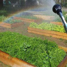 My #beautiful view of the garden this morning!  #beautifullife #abmfoodie #abmhappylife #abmlifeiscolorful #abmlifeissweet #gardener #gardening #garden #gardens #rainbow #communitygarden #community #tuesdaymorning #tuesdayvibes #mornings #beauty #mom #outside